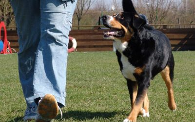 Doggie-fit!
