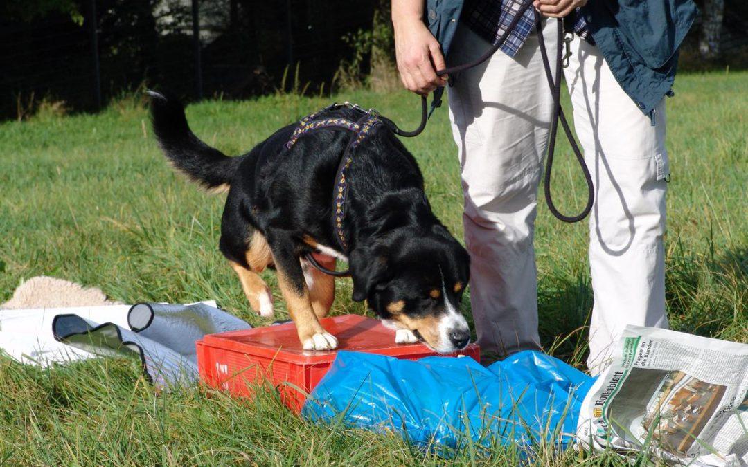 Dogility: Erlebnisparcours für 6 Beine