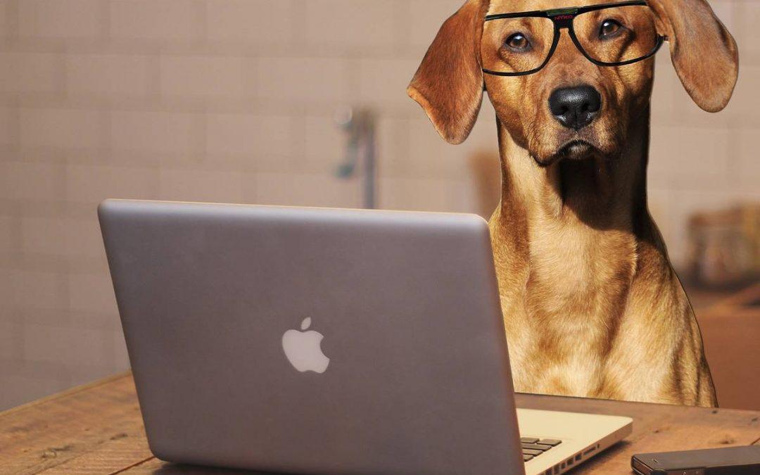 """Online: Grundkurs """"Glücklich mit Hund"""""""