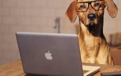 Online: Erst der Kurs – dann der Hund