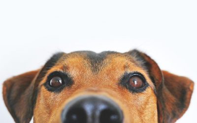 Verstehen Sie Ihren Hund?!