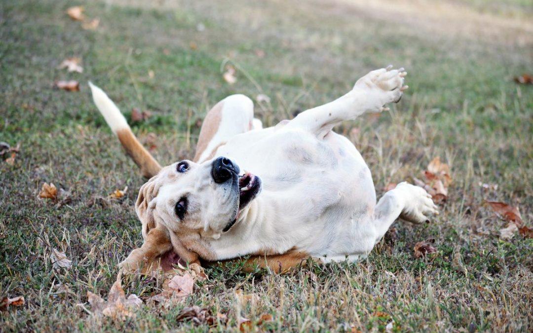 Was braucht (m)ein Hund zum Glücklichsein?!
